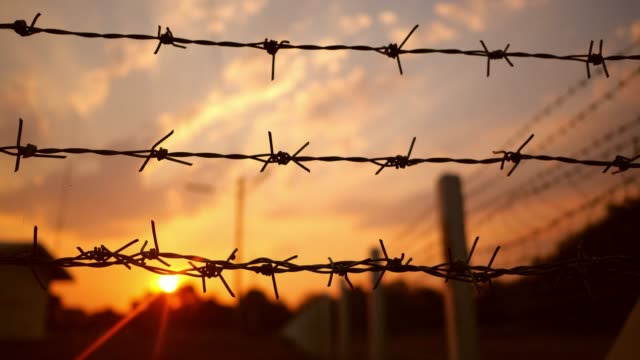 barbed wire at sunset - barbed wire stock videos & royalty-free footage