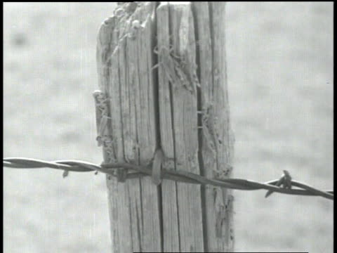 barbed wire fence attached to pole / insects crawling on pole