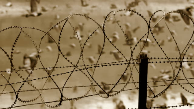 barbed wire fence - fence stock videos & royalty-free footage