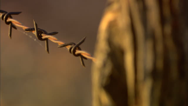 barbed wire stretches out from a fence post. - barbed wire stock videos & royalty-free footage