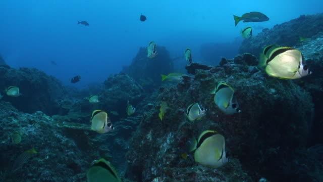barberfish - pälsteckning bildbanksvideor och videomaterial från bakom kulisserna