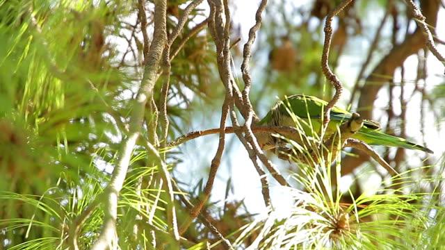 vidéos et rushes de oiseau de catalogne de barcelone - barcelone espagne