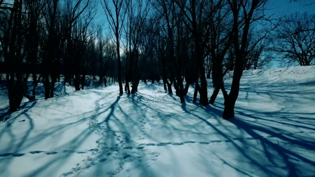 Bare black trees under winter blue sky