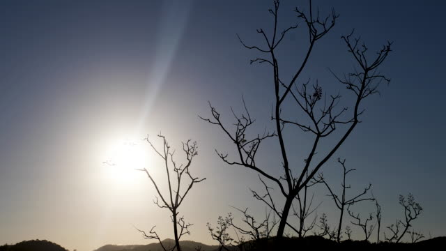 bare deciduous winter trees at sunset - branch stock videos & royalty-free footage
