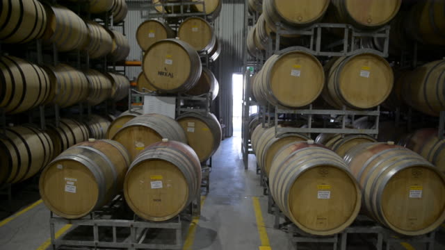 bare grape vines during winter season and wine making facility in warrandyte, victoria, australia on monday, june 29 - viniculture stock videos & royalty-free footage