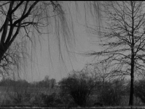 vídeos de stock e filmes b-roll de bare limbs of weeping willow hanging fg almost bare tall tree framing right shrub border bg field more trees beyond no people animals fall autumn - bare tree