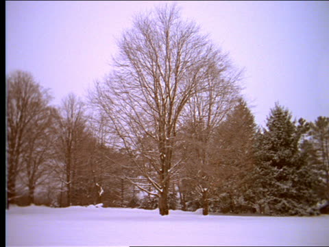 vídeos de stock e filmes b-roll de bare maple tree in snowy clearing with snow falling - bare tree