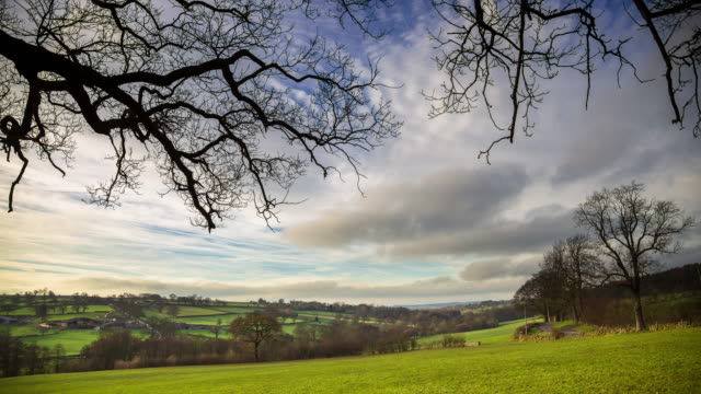 bare tree and pasture, yorkshire, england - pasture stock videos & royalty-free footage