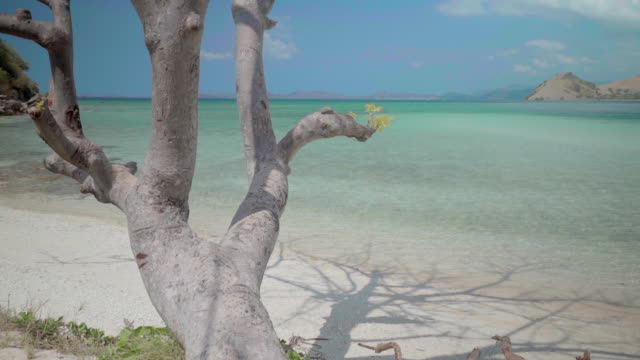 vidéos et rushes de bare tree at beach against sky during sunny day, idyllic view of sea - komodo island, indonesia - bare tree