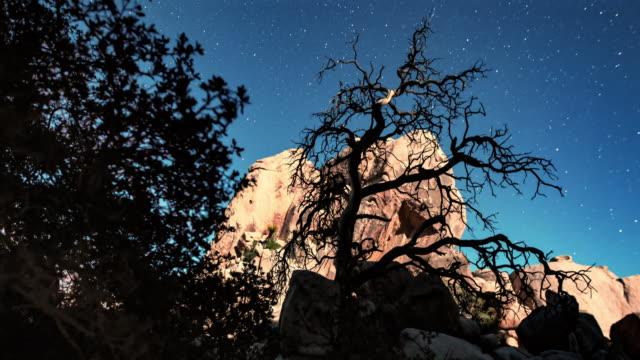 bare tree at night - stenformation bildbanksvideor och videomaterial från bakom kulisserna