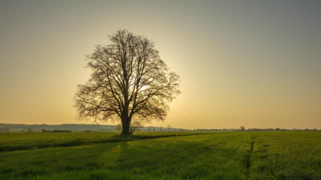 vídeos y material grabado en eventos de stock de árbol desnudo de ds al amanecer - bare tree