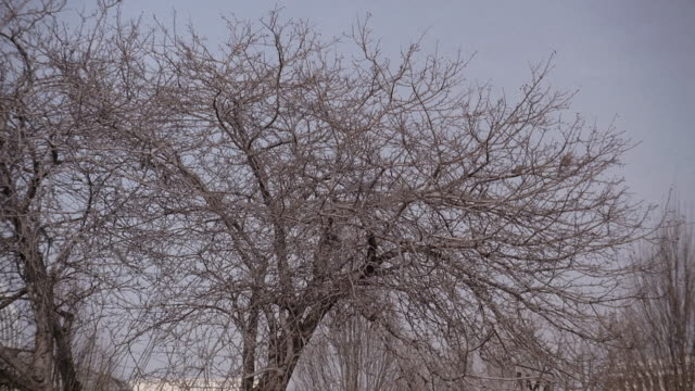 r/f bare tree branches against blue sky / washington, d.c., united states - bare tree stock-videos und b-roll-filmmaterial