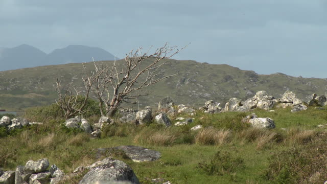 bare tree in prairie - bare tree stock-videos und b-roll-filmmaterial