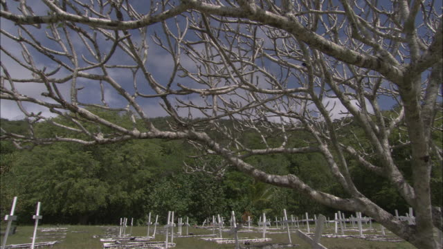 stockvideo's en b-roll-footage met ms td bare tree on cemetery, yarrabah mission, queensland, australia - bare tree