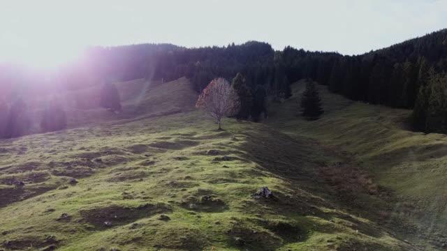 stockvideo's en b-roll-footage met bare tree on meadow against dreamy forest backdrop - bare tree