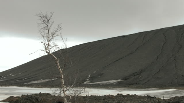 vidéos et rushes de a bare tree sways in a breeze.  - bare tree