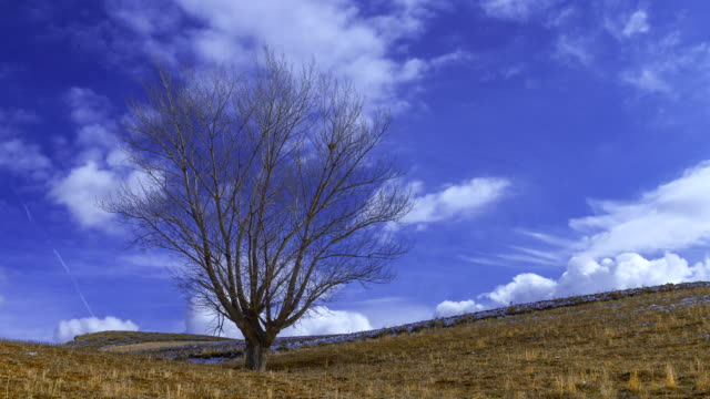 stockvideo's en b-roll-footage met bare tree under blue sky with passing clouds hq - bare tree