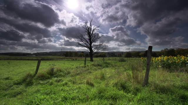 crane: bare tree - crane shot stock videos & royalty-free footage