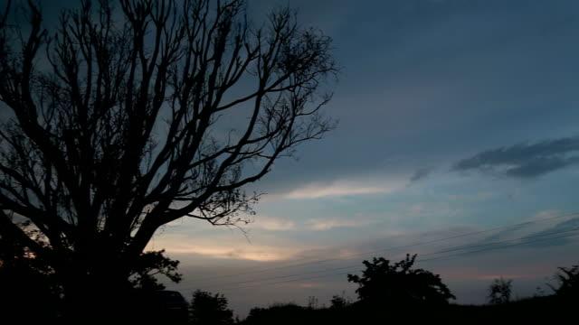 kahler baum - bare tree stock-videos und b-roll-filmmaterial