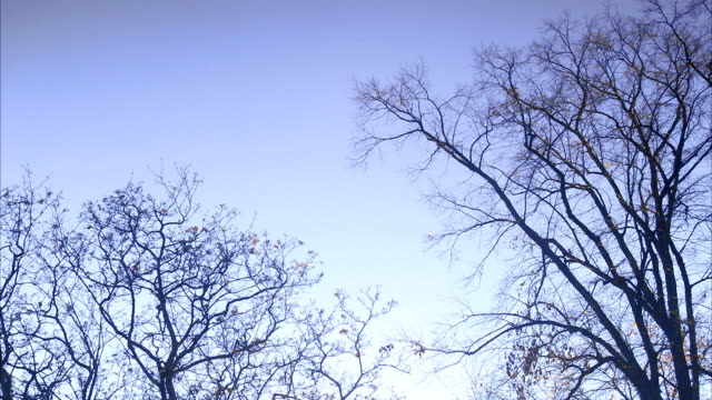 Bare trees against blue sky Sweden.