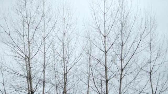 bare bäume hintergrund - bare tree stock-videos und b-roll-filmmaterial