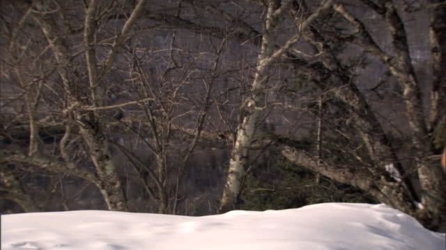 ms pan bare trees behind snow bank rack focus ms pair of gloves propped up w/ hockey sticks inside leaning on post soft water drops falling behind... - water sports equipment stock videos and b-roll footage