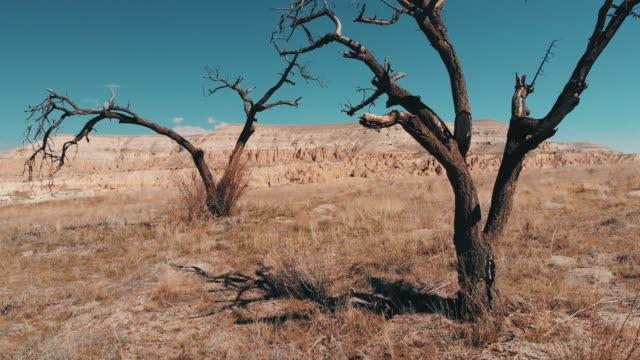 bare trees in cappadocia - extinct stock videos & royalty-free footage