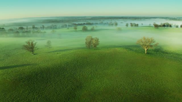 alberi nudi nel paesaggio rurale in mattinata nebbiosa - colpo di drone - alabama video stock e b–roll