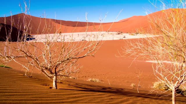 dl ws bare trees in the dead vlei - natural landmark stock videos & royalty-free footage