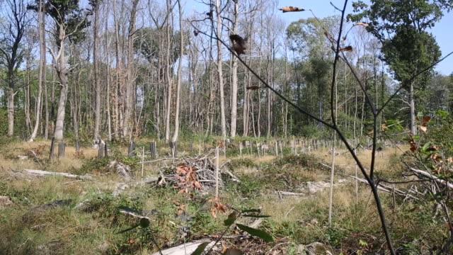 vídeos y material grabado en eventos de stock de bare trees infected with chestnut tree ink in the forests of montmorency, île-de-france, france on thursday, september 17, 2020. - bare tree