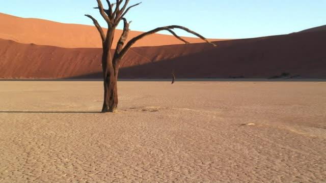 vídeos de stock, filmes e b-roll de ms zo ws bare trees on salt pan in dead vlei / namib desert, namibia - clima árido
