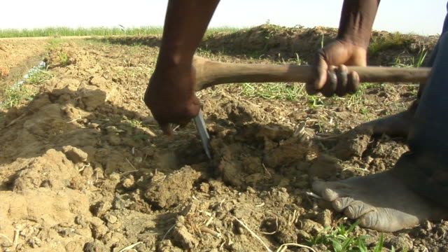 cu, barefoot man planting seeds in field, low section, near niono, mali - barefoot点の映像素材/bロール