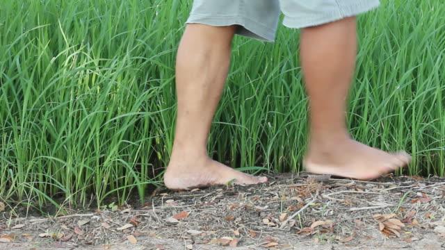 vídeos y material grabado en eventos de stock de camine descalzo seedlings - descalzo