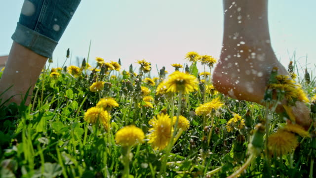 ms barefoot woman running in sunny field with dandelions - dandelion stock videos & royalty-free footage