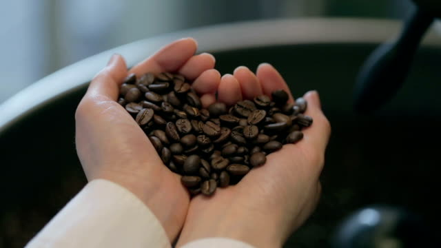 barista holding coffee beans in her hand like heart shape - barista stock videos and b-roll footage