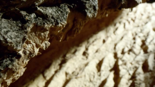 bark and inside of a tree trunk - wood grain stock videos & royalty-free footage