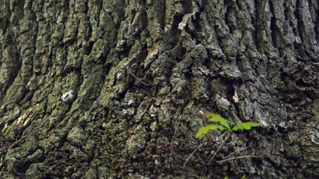 vídeos de stock, filmes e b-roll de bark of a oak tree in the forest - casca de árvore