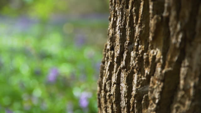 bark of oak tree in woodland - tree trunk stock videos & royalty-free footage
