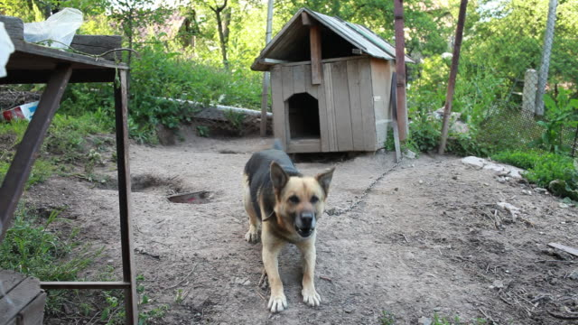 barking dog - barking animal sound stock videos & royalty-free footage