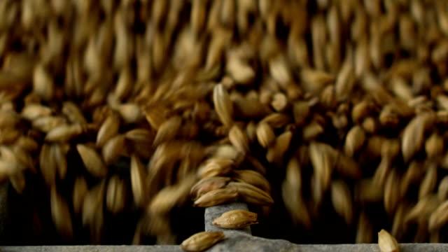 barley falling - barley stock videos and b-roll footage