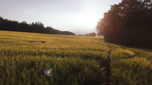 空から見た大麦フィールドでフォレストエッジ春に(4 k /uhd) - 辺縁部点の映像素材/bロール