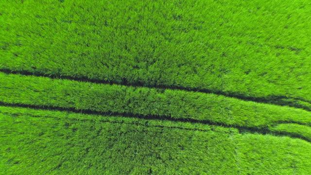 vídeos de stock, filmes e b-roll de vista aérea de campo de cevada na primavera viaduto (4 km/uhd) - ponto de vista de câmera