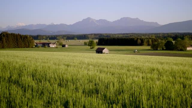 夕暮れ時のバイエルンの田園地帯の大麦畑 - 穀物 ライムギ点の映像素材/bロール