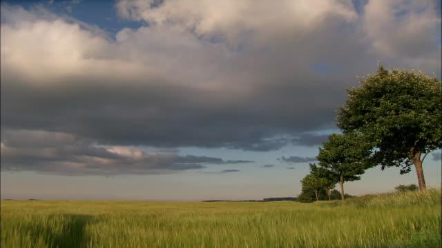 barley fields isle of lewis, scotland - tree stock videos & royalty-free footage