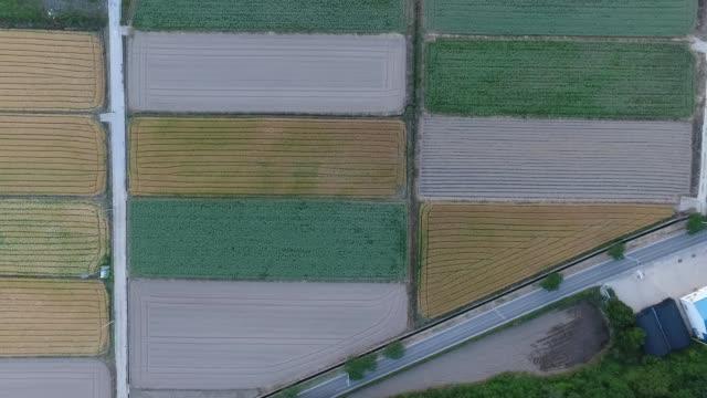 barley fields / jindo-gun, jeollanam-do, south korea - jeollanam do stock videos & royalty-free footage
