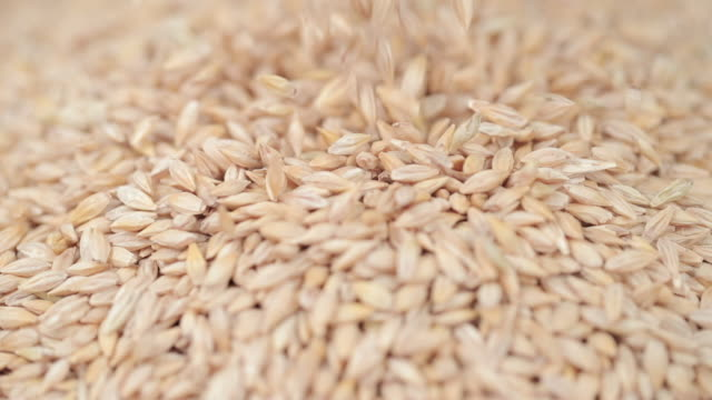 barley grains falling - small stock videos & royalty-free footage
