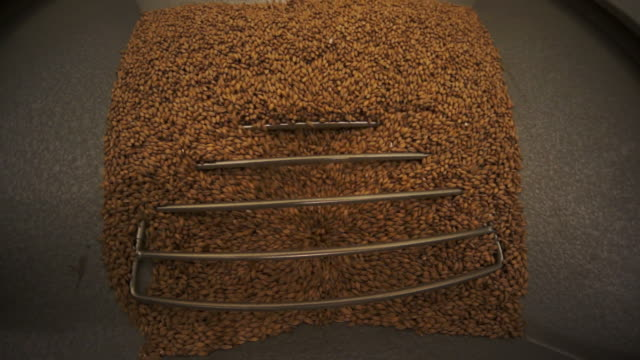 barley is filtered into the mash tank to make beer - barley stock videos and b-roll footage