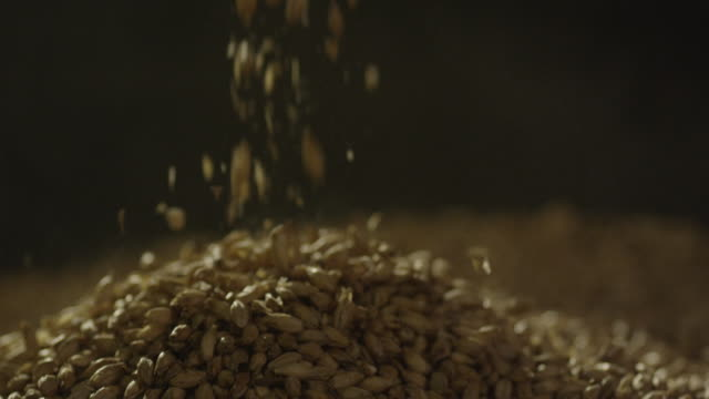 vídeos de stock e filmes b-roll de barley seeds falling from scoop onto a pile - semente