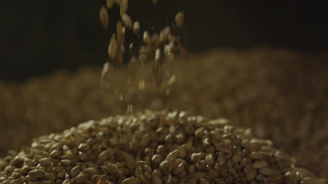 barley seeds falling from silver scoop - seed stock videos & royalty-free footage
