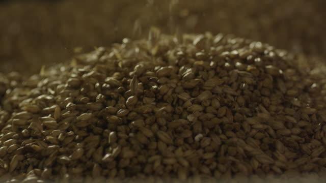 vidéos et rushes de barley seeds falling into pile - graine